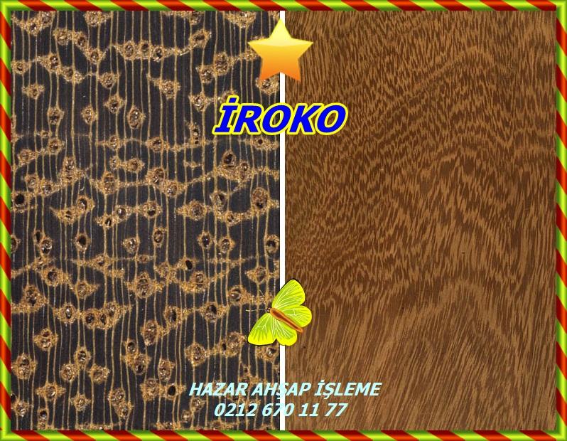 iroko232