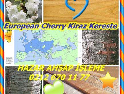 Sweet Cherry, Wild Cherry, European Cherry ,Kiraz Kereste, (Prunus avium),