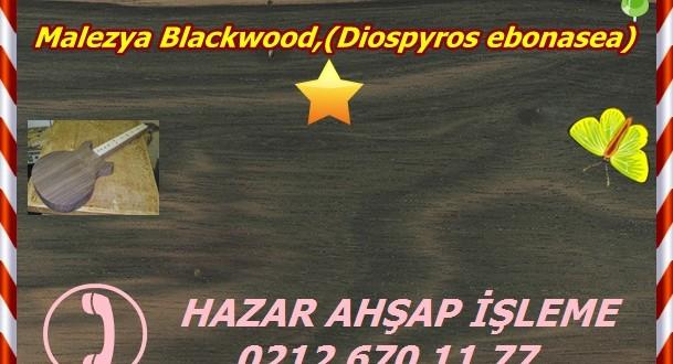 malaysian-blackwood