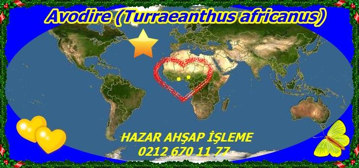 map_oAvodire (Turraeanthus africanus)