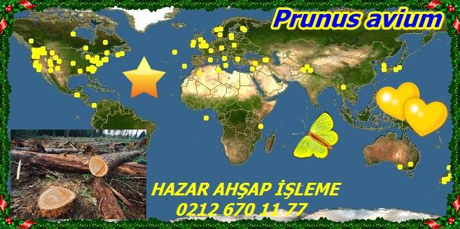 map_of_PruPrunus avium11