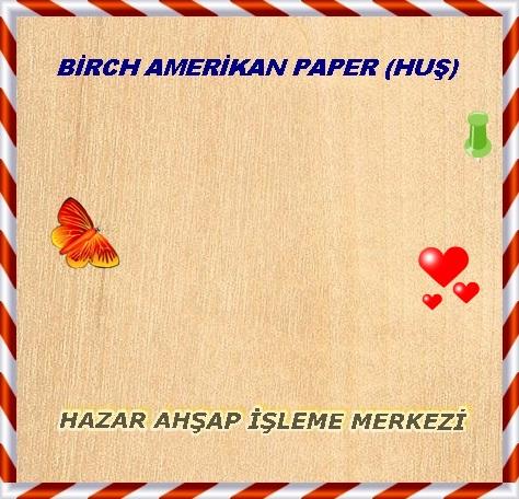 paper-birch-kağıt-sarı-huş1