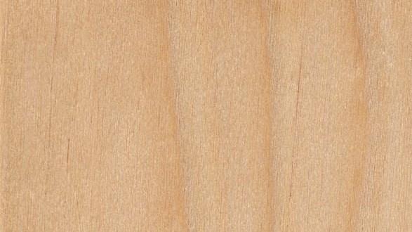 yellow-birch-sealed sarıhuş