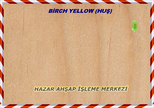 yellow-birch-sealed-sarıhuş