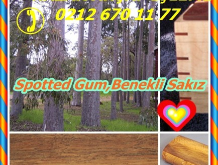 Spotted Gum,Benekli Sakız,Corymbia maculata, (syn Okaliptüs maculata.)