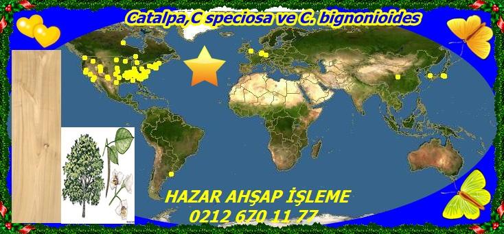 20mC speciosa ve C. bignonioides