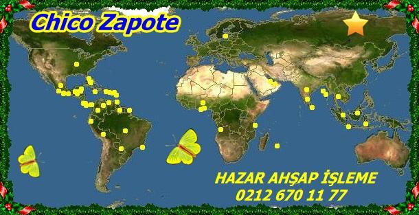 20mChico Zapote33