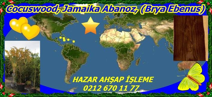 20mCocuswood, Jamaika Abanoz, (Brya Ebenus)
