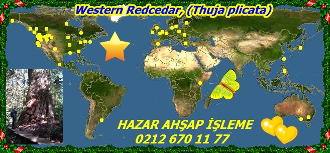20mWestern Redcedar, (Thuja plicata)332