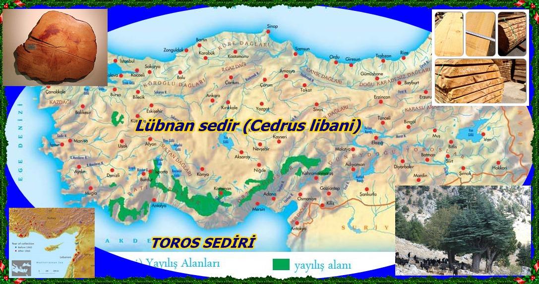 21_12_2008_16_0_13_toros_sediri_haritasi