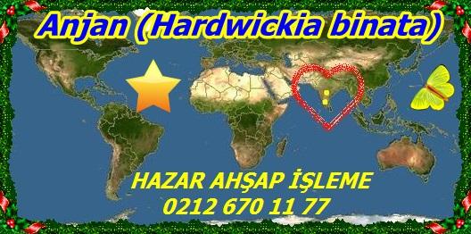 2460Anjan (Hardwickia binata)