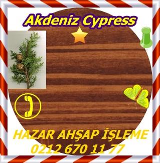 Akdeniz Cypress, İtalyan Cypress