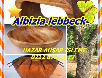 Albizia lebbeck,Lebbeck, Kokko