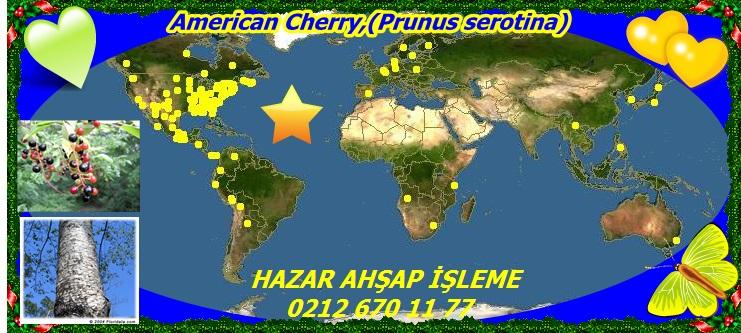 American Cherry,(Prunus serotina)1