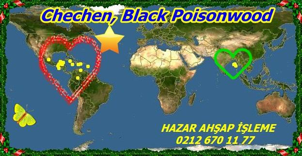 Black Poisonwood99