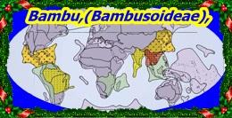 Carte bambusoideae