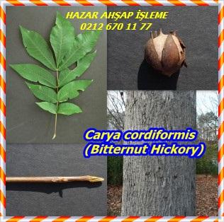 Carya-cordiformis-Bitternut-Hickory-300x298