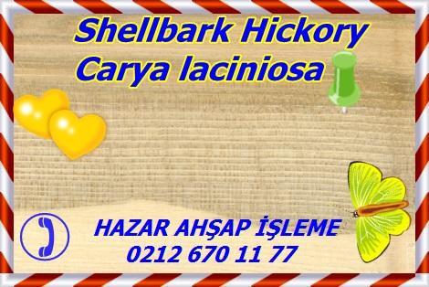 Carya laciniosa, Shellbark Hickory, Indiana