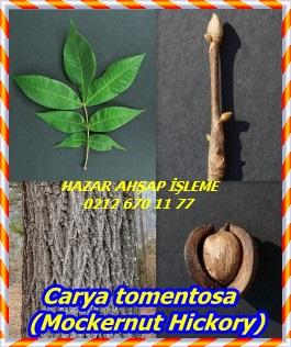 Carya-tomentosa-Mockernut-Hickory-249x300