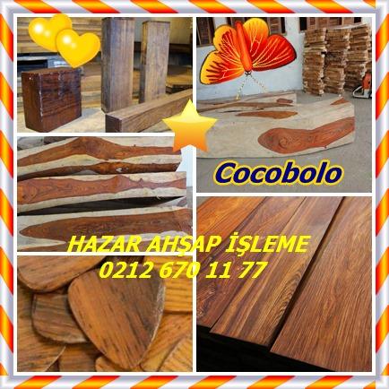 Cocobolo1