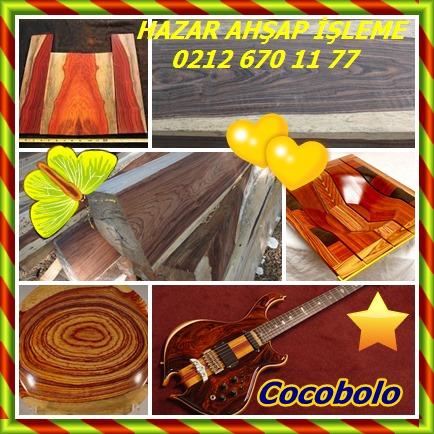 Cocobolo3