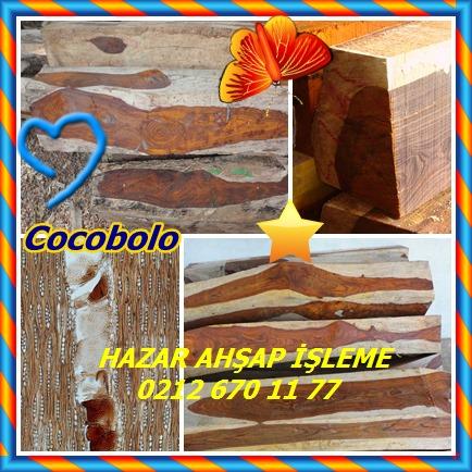 Cocobolo6