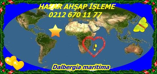 Dalbergia maritima44