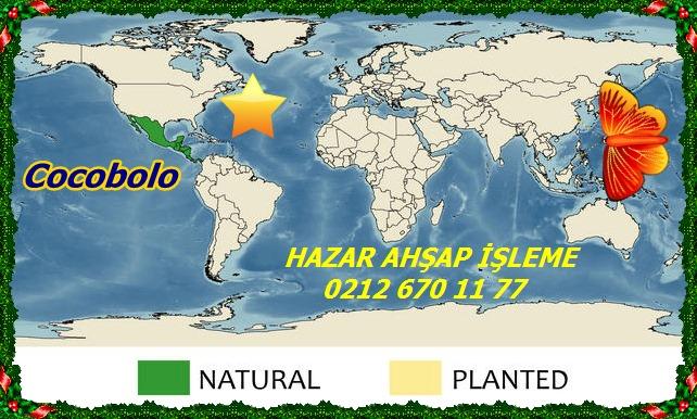 Dalbergia_retusa_map