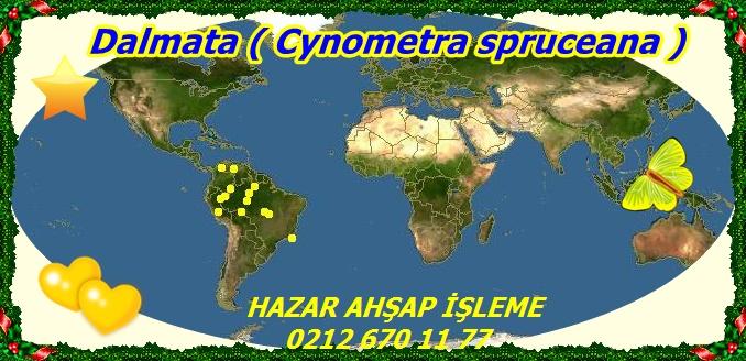 Dalmata ( Cynometra spruceana )2