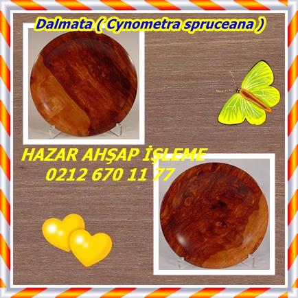 Dalmata ( Cynometra spruceana )3