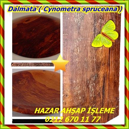 Dalmata ( Cynometra spruceana )4