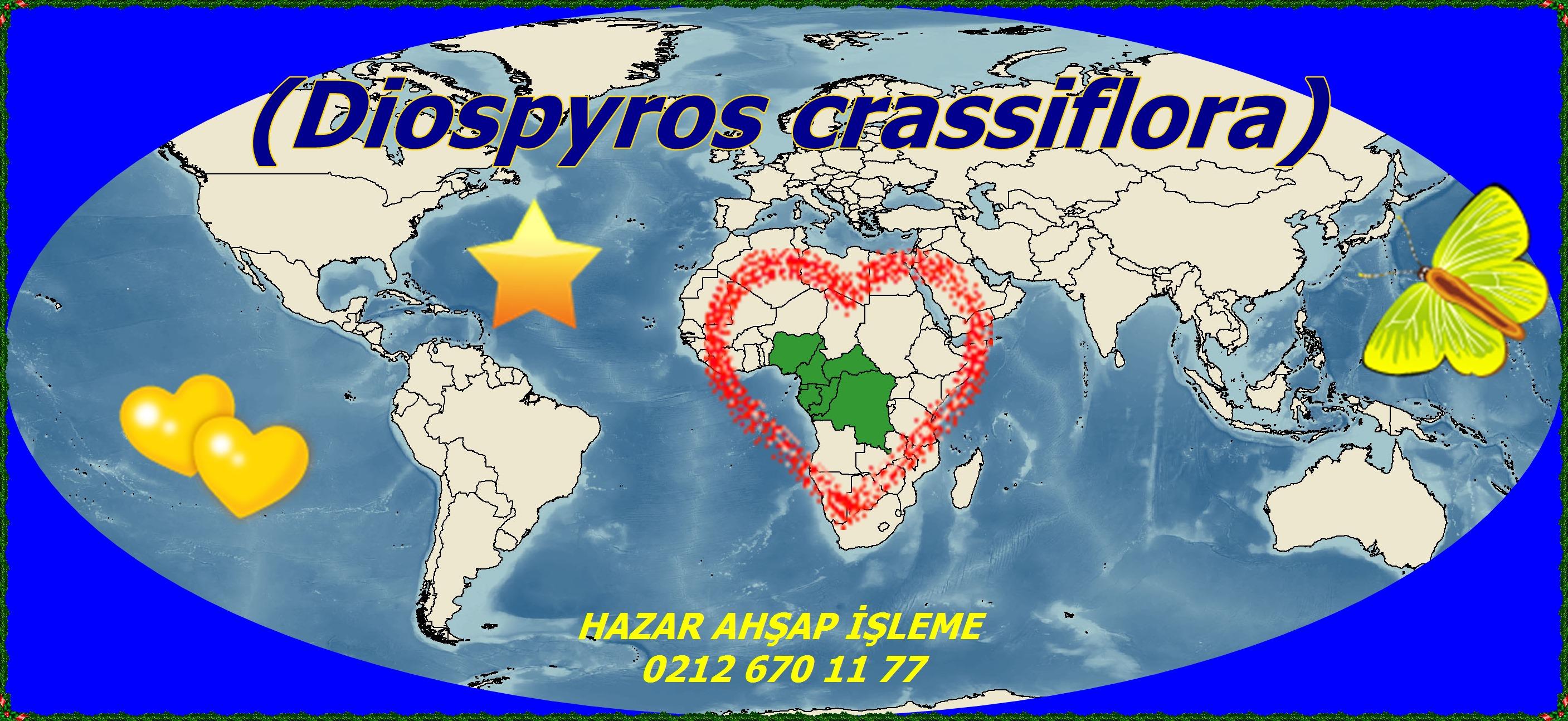 Diospyros_crassiflora_map(Diospyros crassiflora)