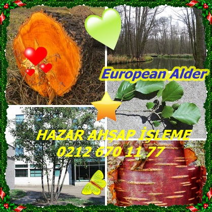 European Alderjjgg