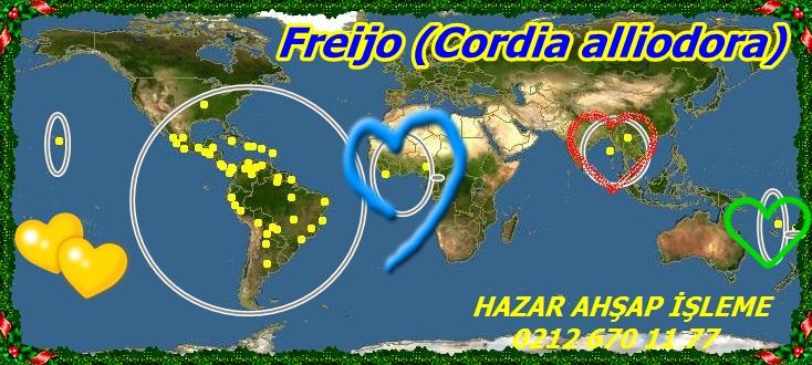 Freijo (Cordia alliodora)