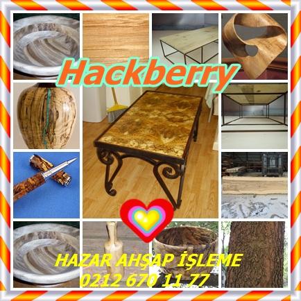 Hackberry2