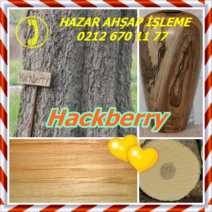 Hackberry3