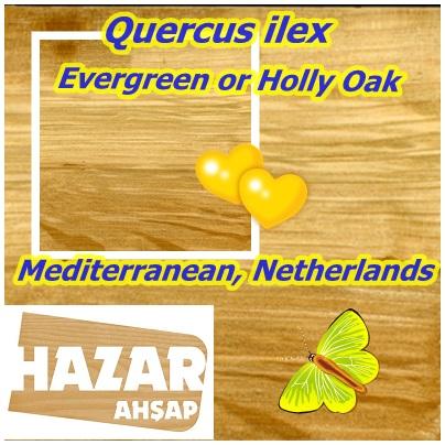 Mediterranean, Netherlands