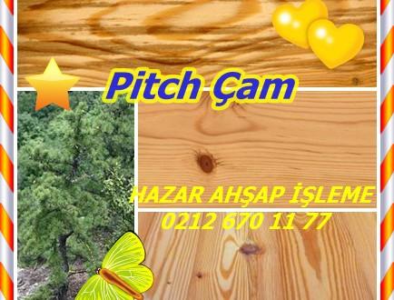 Pitch Pine,Çıralı çam, Pinus rigida, Pitch Çam,çıralı çam ,candlewood çam, meşale çam