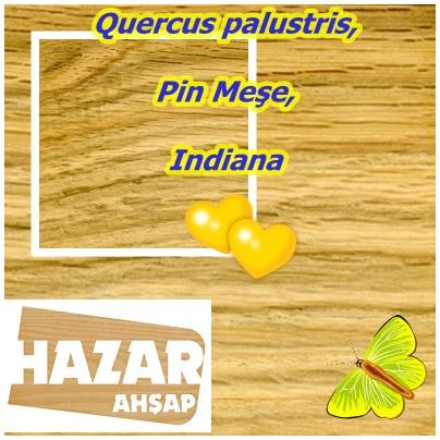 Quercus palustris,