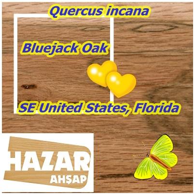 SE United States, Florida