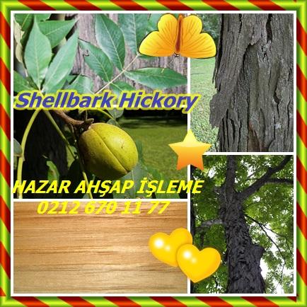 Shellbark Hickory22