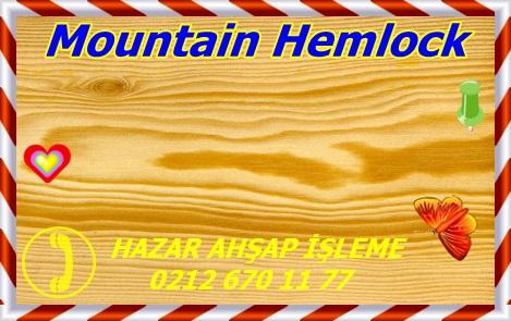 Tsuga mertensiana, Mountain Hemlock, Oregon