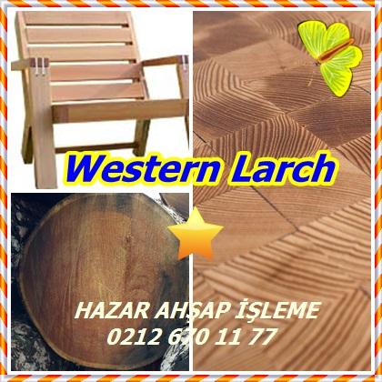 Westernee Larch