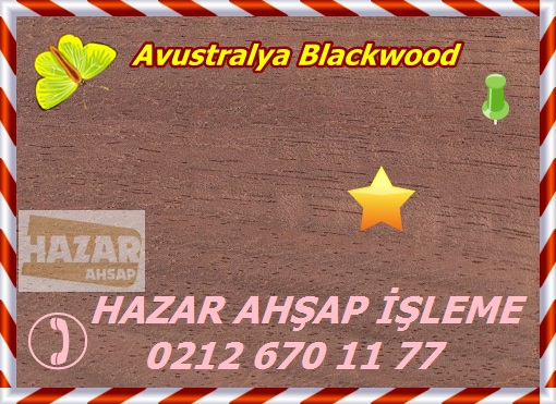 australian-blackwood-s