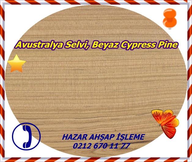 australian-cypress