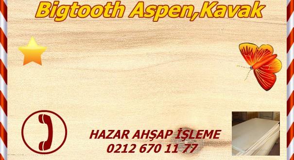 bigtooth-aspen