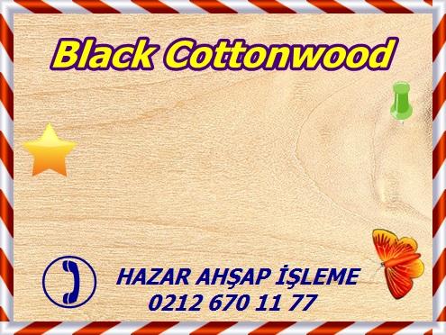 black-cottonwood