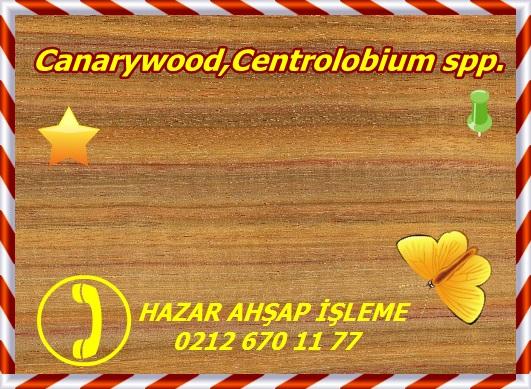 canarywood-jh