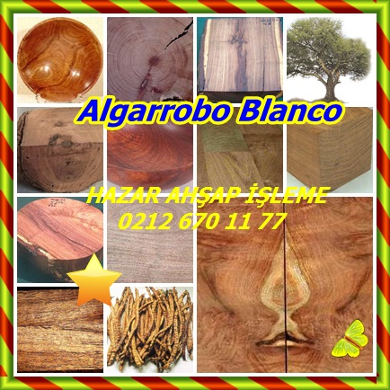 cats Algarrobo Blanco11