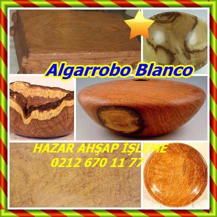 cats Algarrobo Blanco2121